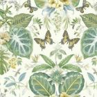 ON1601 Tropical Butterflies York Wallpaper