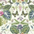 ON1603 Tropical Butterflies York Wallpaper