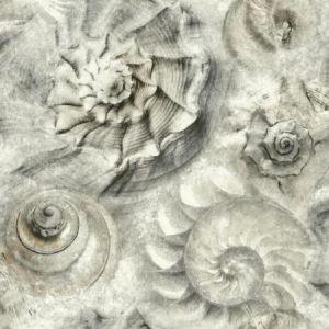 York CM3346 Opulent Shell Wallpaper