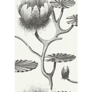 95/4020-CS LILY Black White Cole & Son Wallpaper