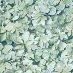 RMK11192WP Hydrangea Bloom Wall Appliques York Wallpaper