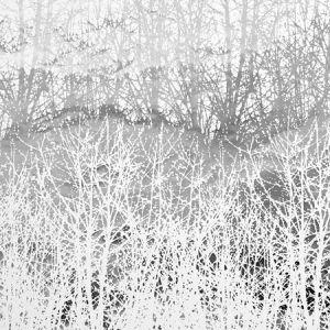 2707244 BIRCHES Silver Schumacher Wallpaper